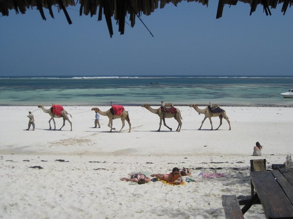 Matrimonio In Kenia : Zanzibar il viaggio di nozze in paradiso