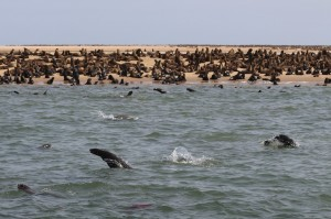 Pelican Point, Seal Cruise, Walvis Bay, Namibia