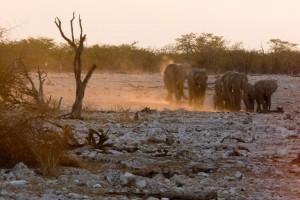 Elephant Family coming to Okaukuejo waterhole